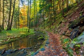 Přírodní rezervace Údolí Doubravy