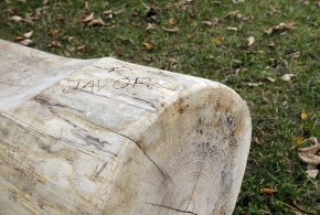 Ukázka druhů dřeva v podobě laviček (s popisem)