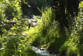 Naučná stezka povodím Botiče