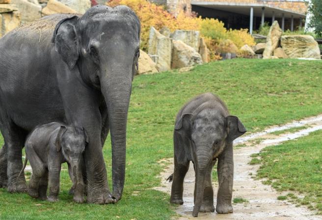 Jedničkáři za korunu v Zoo Praha